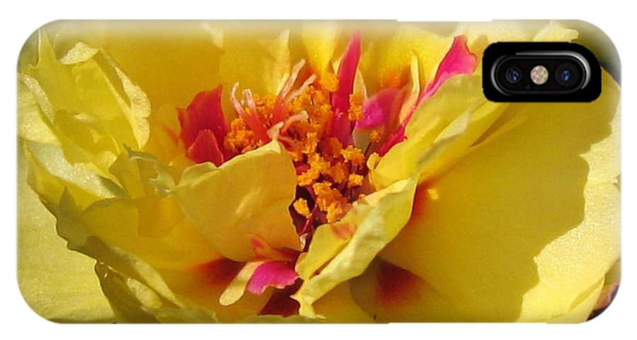 Mccombie IPhone X Case featuring the photograph Portulaca Named Happy Hour Banana by J McCombie