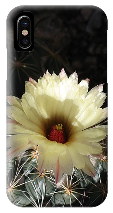 Cactus IPhone X Case featuring the photograph Pure Beauty by Christiane Schulze Art And Photography