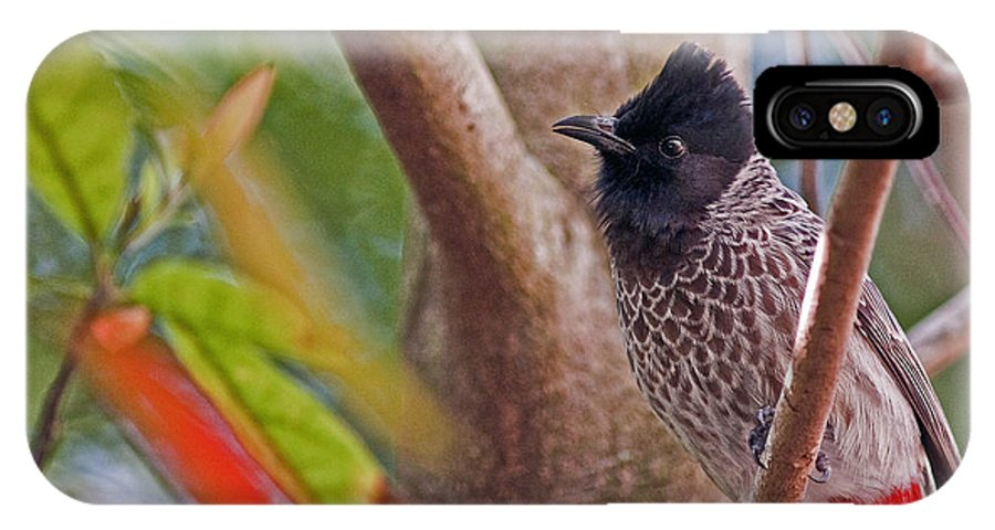 Red Vented Bulbul IPhone X Case featuring the photograph Red Vented Bulbul by Winston D Munnings
