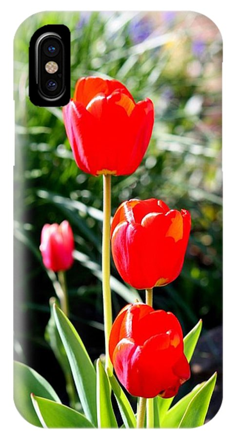 Roses Beautiful Sunny Day IPhone X Case featuring the photograph 3 Roses by Ian Smith