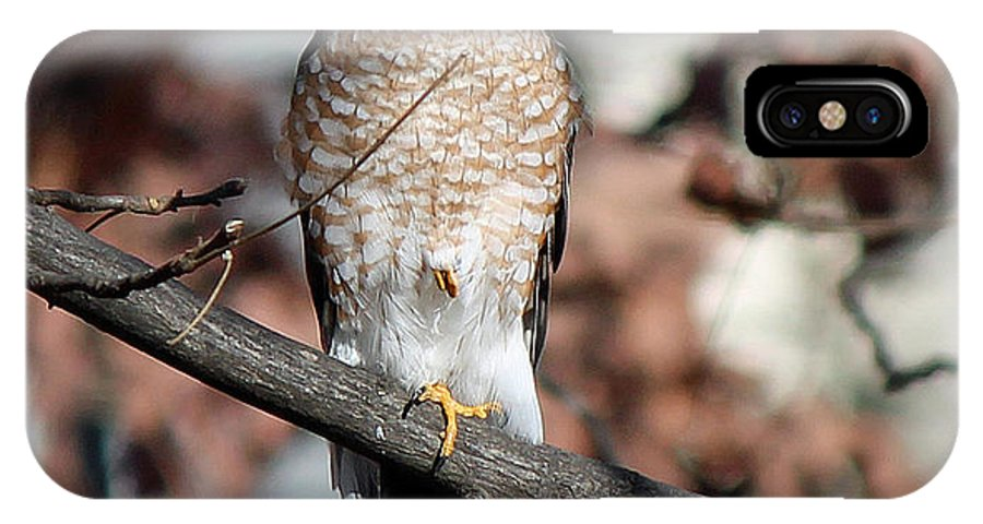 Hawk IPhone X Case featuring the photograph Sharp-shinned Hawk 2 by Jamie Smith
