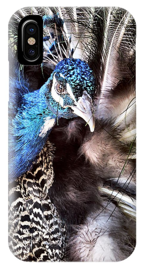 Peacock IPhone X Case featuring the photograph Strike A Pose by Art Dingo