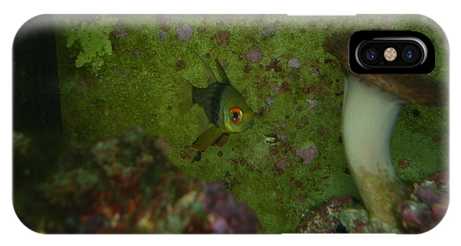 Taken Through Side Of Aquarium IPhone X Case featuring the photograph Tropical Fish And Coral by Robert Floyd