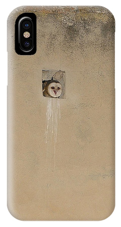 Barn Owl IPhone X Case featuring the photograph Untitled by Javier Moranta / Vwpics