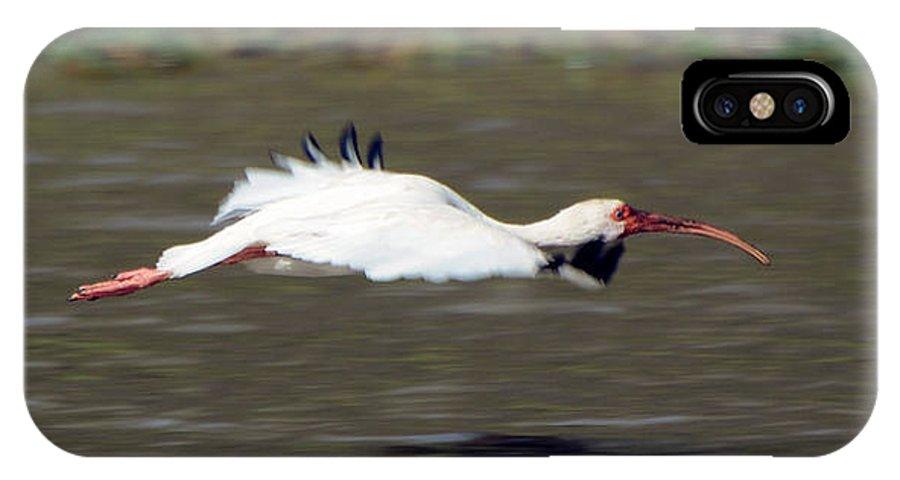 White Ibis In Flight IPhone X Case featuring the photograph White Ibis In Flight by Savannah Gibbs