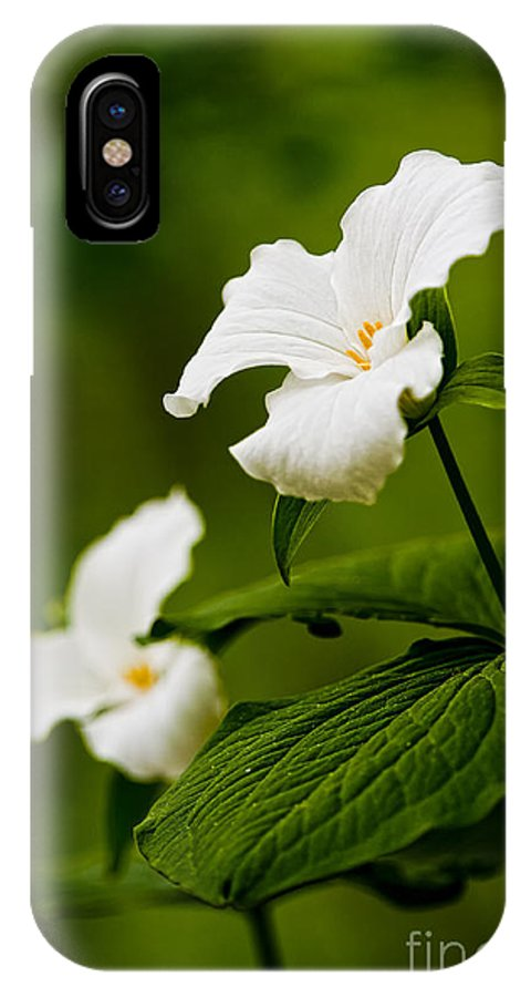 Michael Cummings IPhone X / XS Case featuring the photograph White Trillium - Trillium Grandiflorum by Michael Cummings