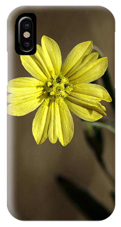 Flower IPhone X Case featuring the photograph Yellow Flower by Betty Depee