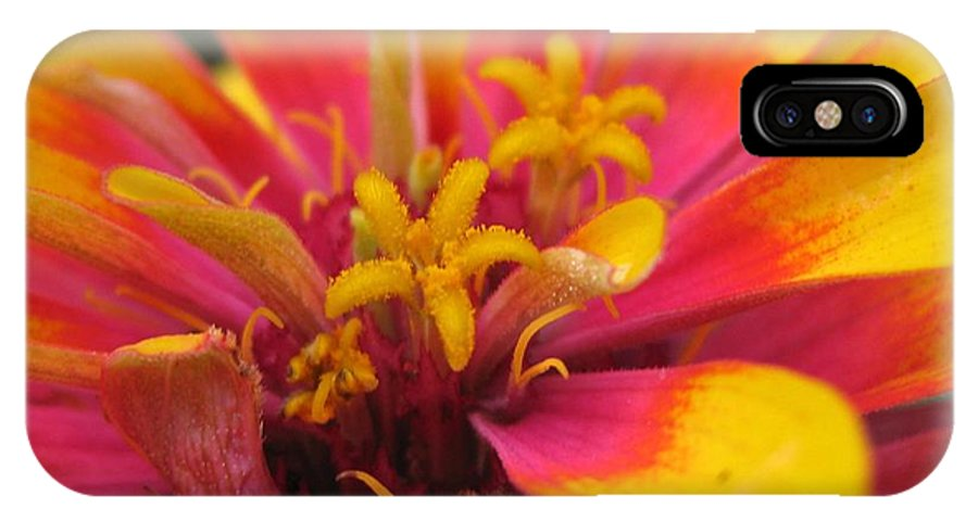 Mccombie IPhone X Case featuring the photograph Zinnia Named Swizzle Scarlet And Yellow by J McCombie