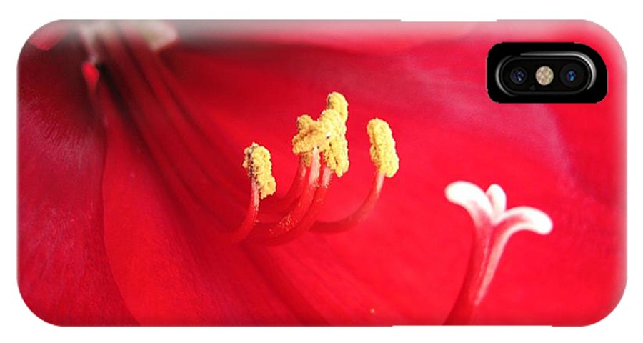 Mccombie IPhone X Case featuring the photograph Amaryllis Named Black Pearl by J McCombie
