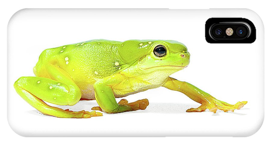 Amphibian IPhone X Case featuring the photograph Amphibians On White by Shannon Benson