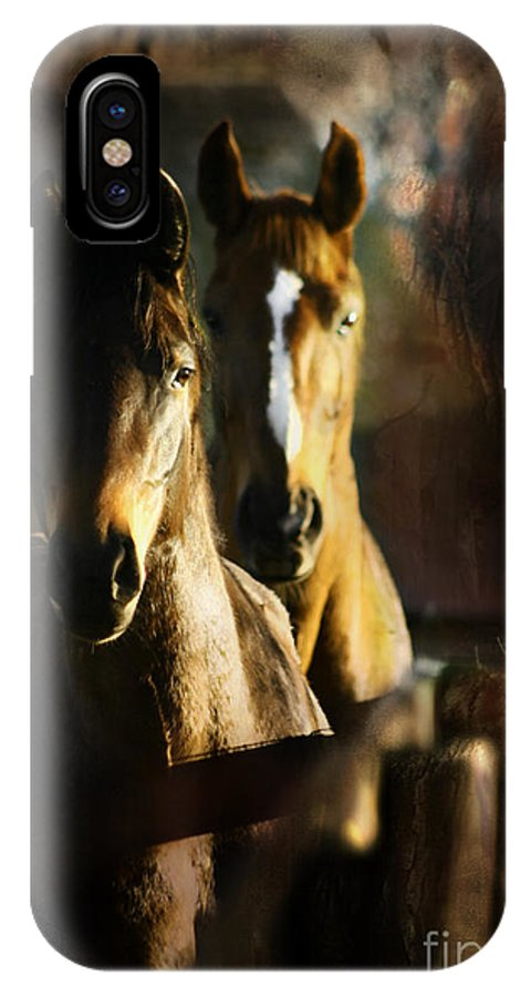 Horse IPhone X Case featuring the photograph Autumn Colors by Angel Ciesniarska