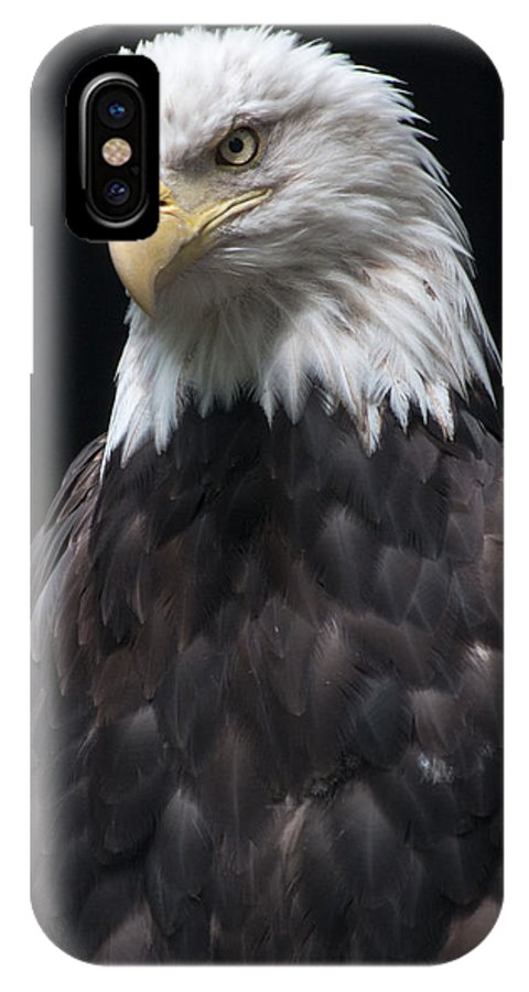 Bald Eagle IPhone X Case featuring the photograph Bald Eagle by Gaurav Singh