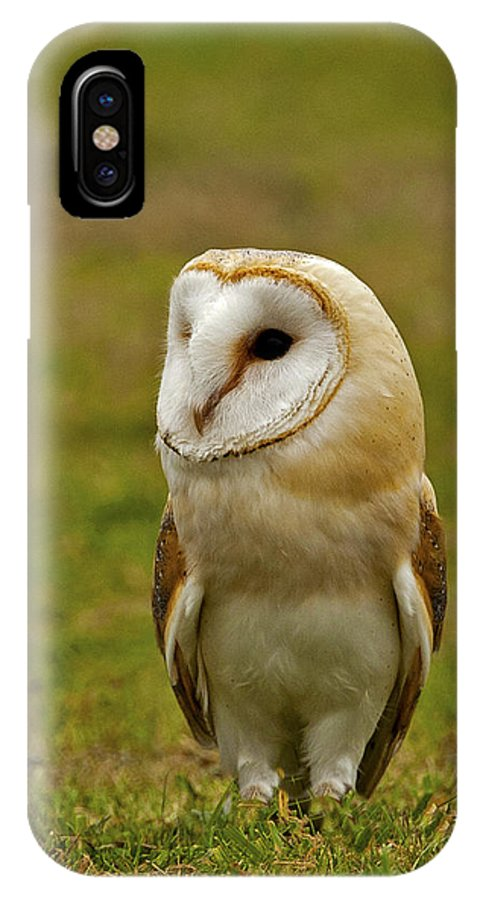 Barnowl IPhone X Case featuring the photograph Barn Owl by Paul Scoullar