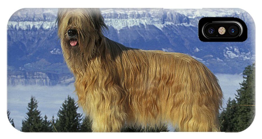 Briard IPhone X / XS Case featuring the photograph Briard Dog by Jean-Michel Labat