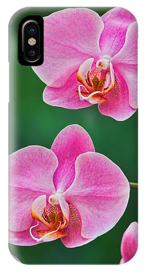 Vegetation IPhone X Case featuring the photograph Flowers by David Davis