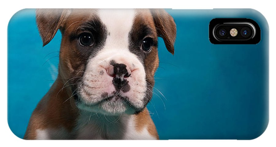 Boxer IPhone X Case featuring the photograph little Boxer dog puppy by Doreen Zorn