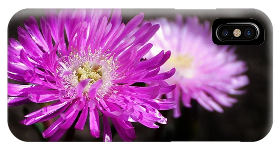 Close Up; Pink; Blossom; Sunlight; Nature; Plant; Flower; Garden; Background; Petals; Decorative; White; IPhone X Case featuring the photograph Pink by Werner Lehmann