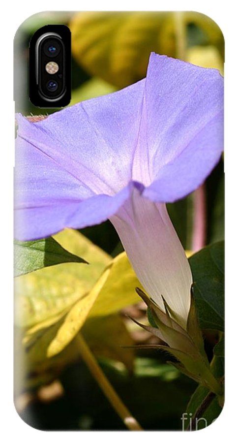 Beauty IPhone X Case featuring the photograph Purple Morning Glory by Henrik Lehnerer