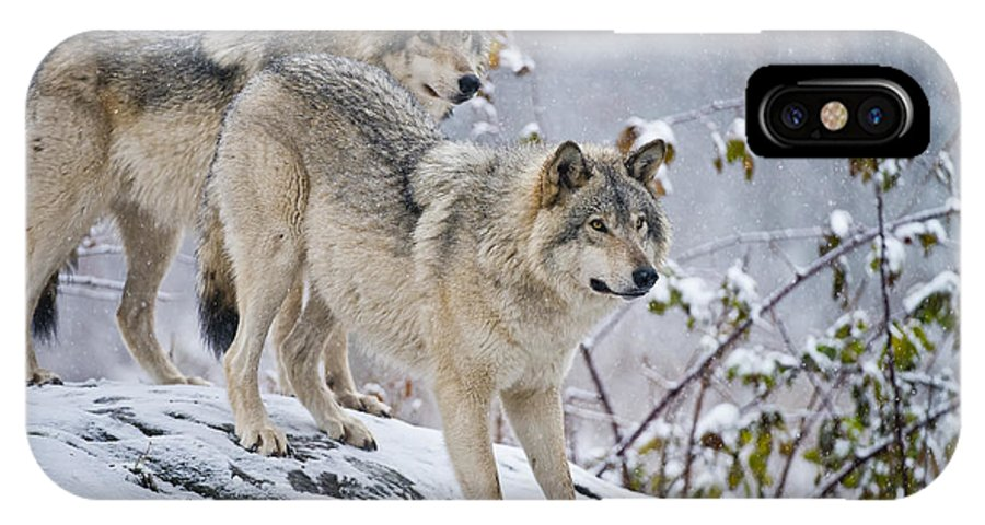 Timber Wolf Photography IPhone X Case featuring the photograph Timber Wolves by Michael Cummings