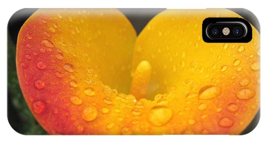 Zantedeschia IPhone X Case featuring the photograph Zantedeschia Named Flame by J McCombie