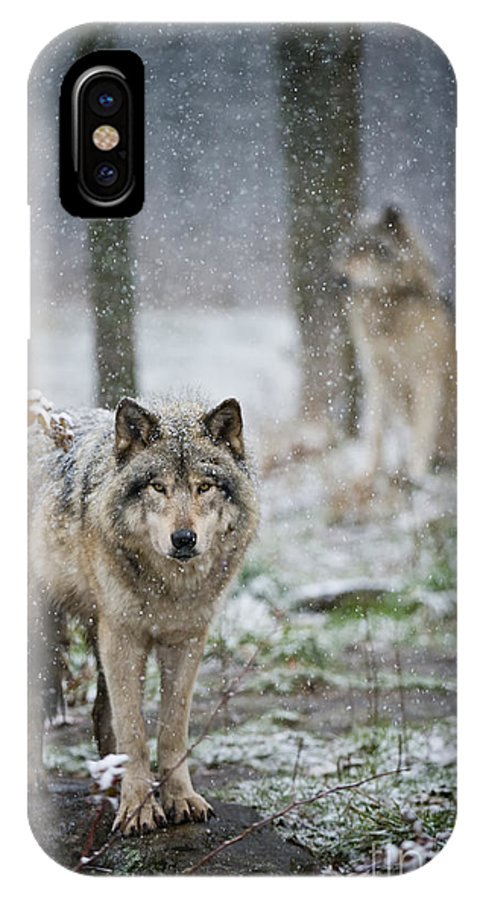 Timber Wolf Photography IPhone X Case featuring the photograph Timber Wolf by Michael Cummings