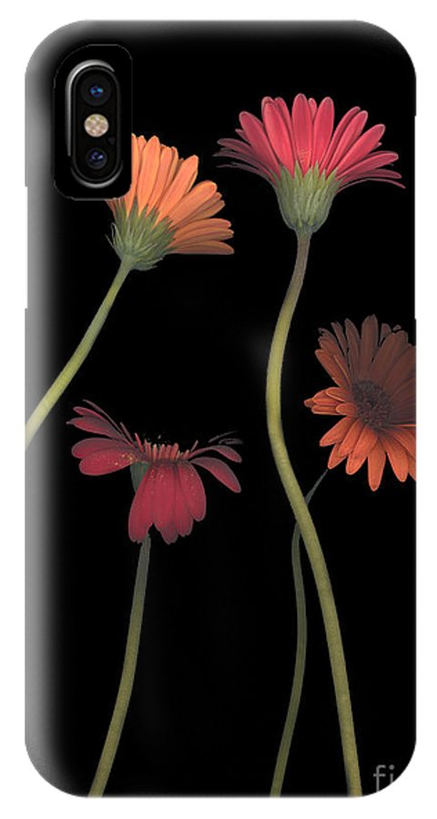 Black IPhone X Case featuring the photograph 4daisies On Stems by Heather Kirk
