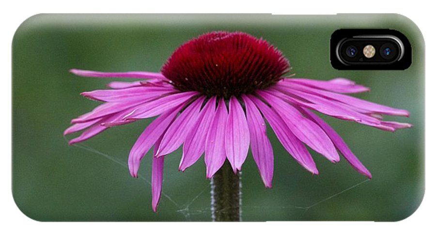 Pink IPhone X Case featuring the photograph Beth Chatto Gardens by Sean Foreman