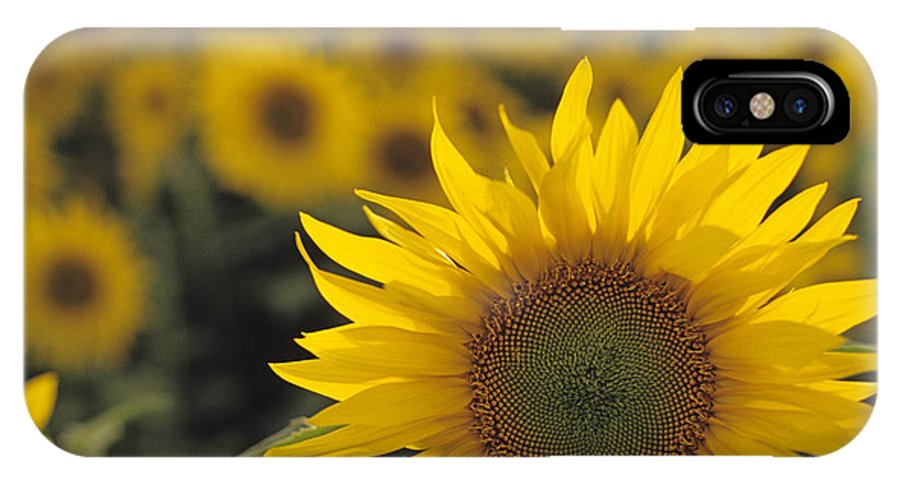 Travel IPhone X Case featuring the photograph Close-up Of Sunflowers In A Field by Jim Corwin