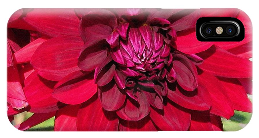 Dahlia IPhone X Case featuring the painting Dahlia Named Nuit D'ete by J McCombie