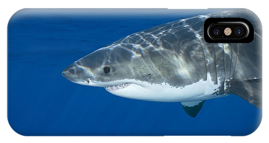 Shark IPhone X Case featuring the photograph Great White Shark by Joe Belanger