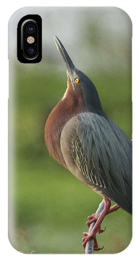 Green IPhone X Case featuring the photograph Green Heron by Dee Carpenter