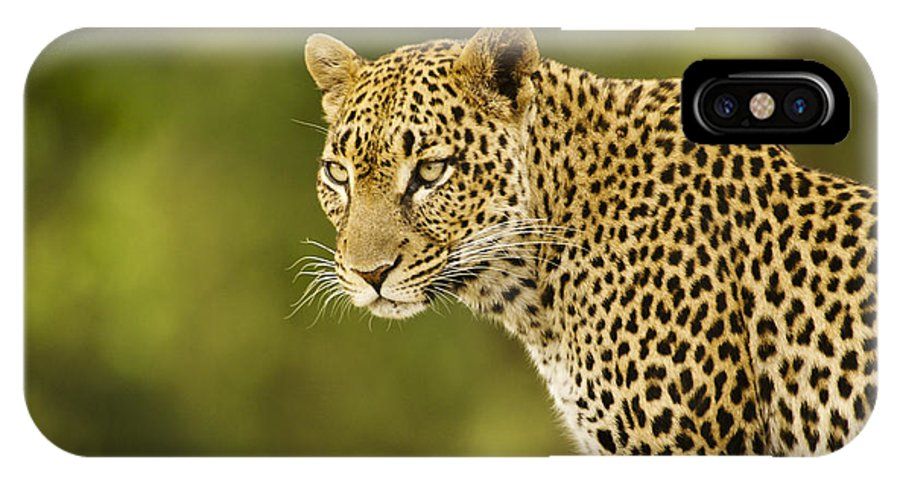 Africa IPhone X Case featuring the photograph Lovely Leopard by Michele Burgess