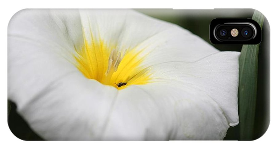 Mccombie IPhone X Case featuring the photograph Morning Glory Named White Ensign by J McCombie