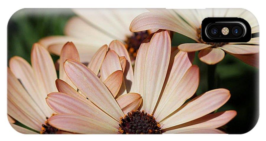 Osteospermum IPhone X Case featuring the photograph Osteospermum Named Sunadora Palermo by J McCombie