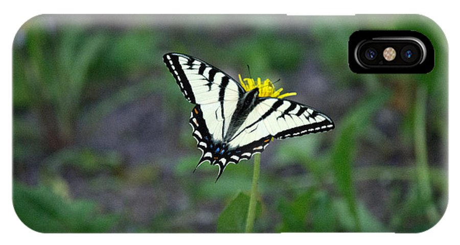 Butterfly IPhone X / XS Case featuring the photograph Sitting Pretty by Linda Kerkau