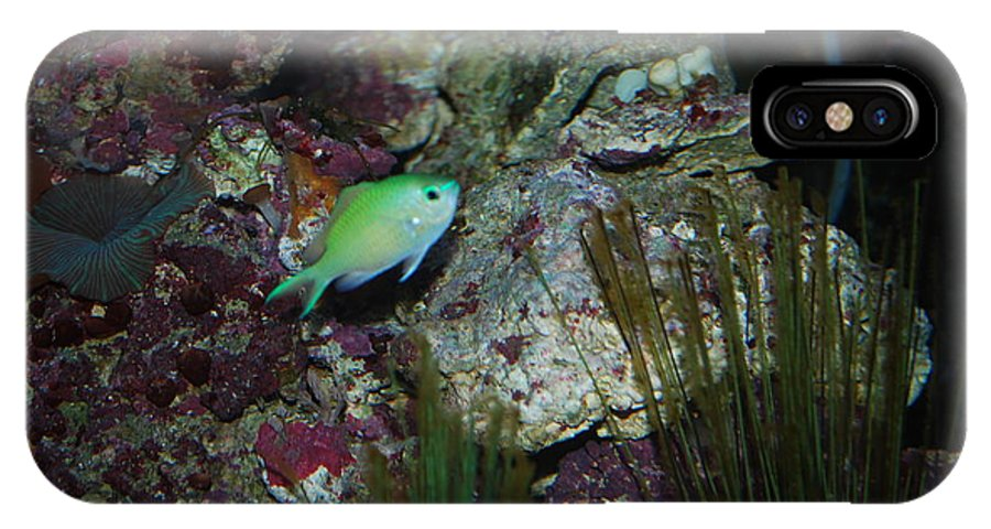 Taken Through Side Of Aquarium IPhone X Case featuring the photograph Tropical Fish by Robert Floyd