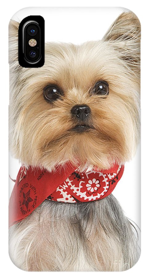 Yorkshire Terrier IPhone X / XS Case featuring the photograph Yorkshire Terrier Dog by Jean-Michel Labat