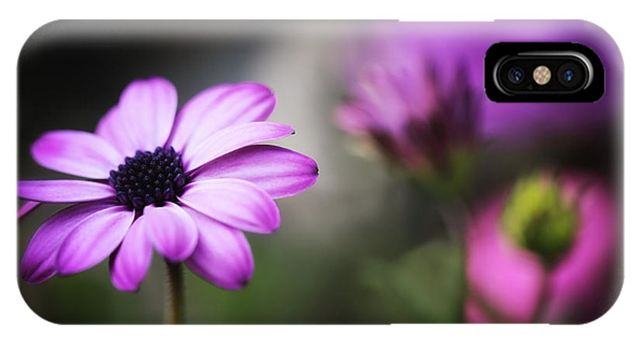 IPhone X Case featuring the photograph A Daisy by LHJB Photography