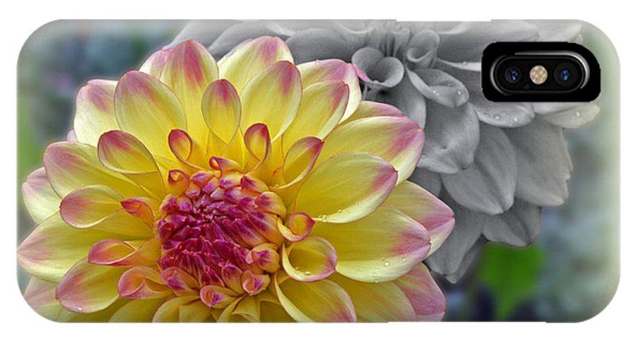 Dahlia IPhone X Case featuring the photograph Dahlia by Paul Pecora