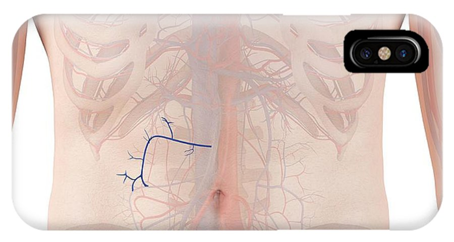 Artwork IPhone X Case featuring the photograph Human Veins by Sciepro
