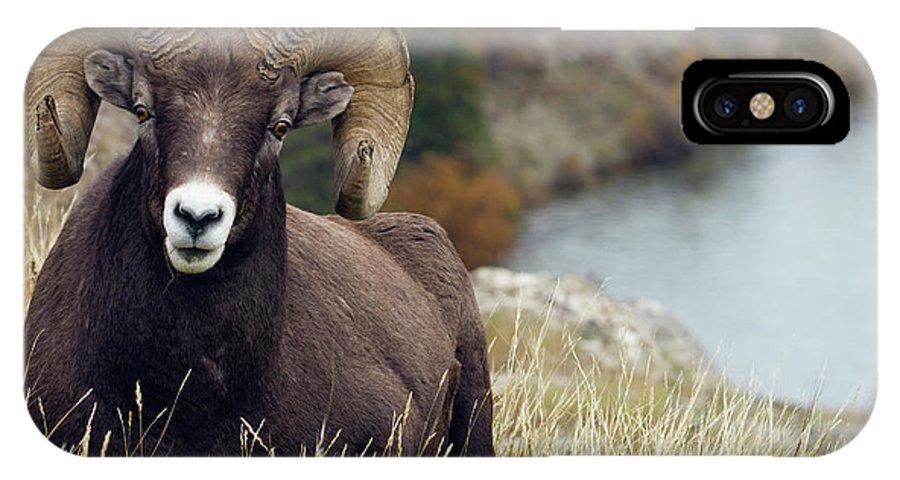 Bighorn IPhone X Case featuring the photograph Rocky Mountain Bighorn Sheep Ram by Ken Archer