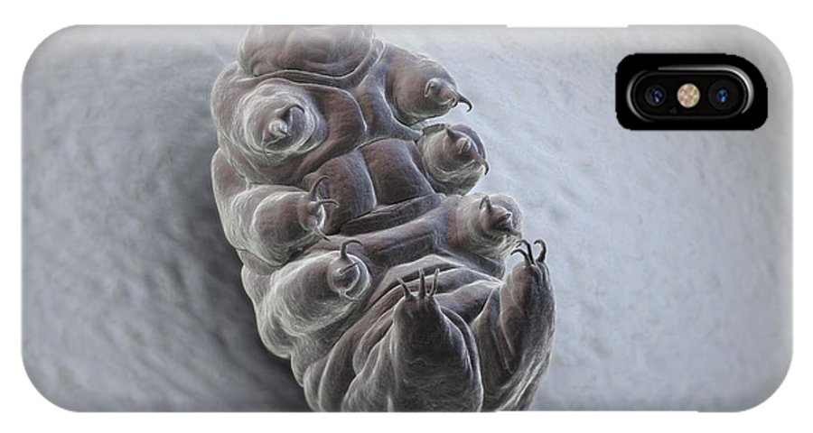 Protostomia IPhone X Case featuring the photograph Water Bear Tardigrades by Science Picture Co