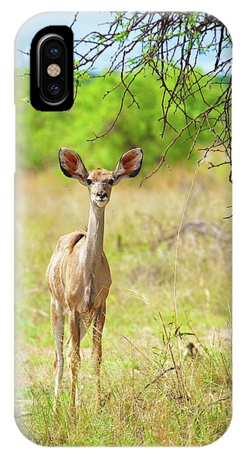 Africa IPhone X Case featuring the photograph African Mammals by Shannon Benson