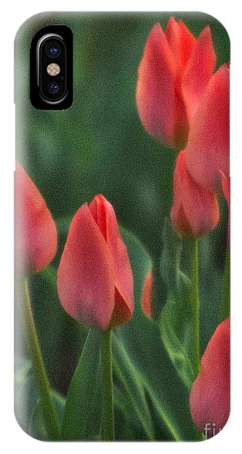 Red Tulips IPhone X Case featuring the photograph 7reds by Robert Marleau
