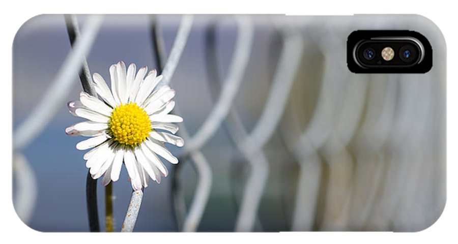 Flower IPhone X Case featuring the photograph Daisy Flower by Mats Silvan