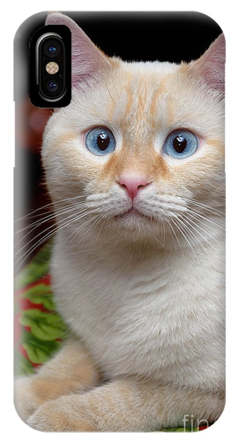 Blue Eyes IPhone X Case featuring the photograph Flame Point Siamese Cat by Amy Cicconi