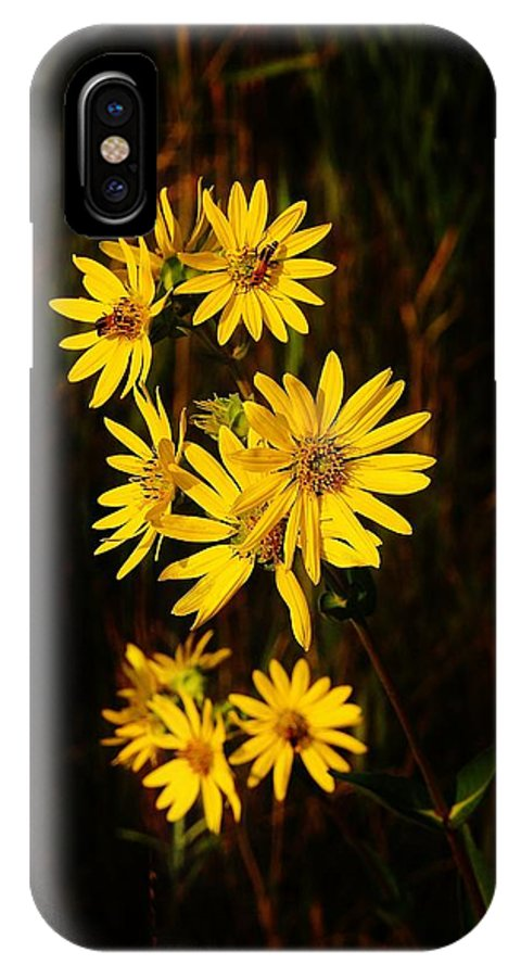 IPhone X Case featuring the photograph Bees And Flowers by Daniel Thompson