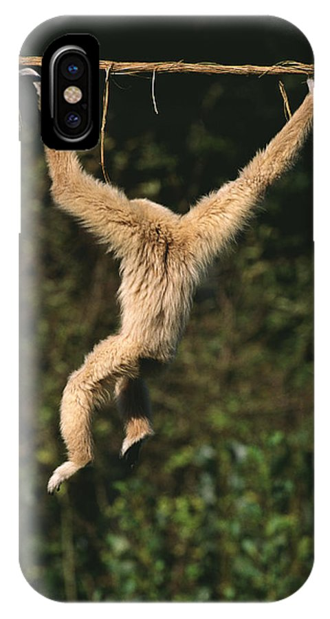 Adult IPhone X Case featuring the photograph Gibbon A Mains Blanches Hylobates Lar by Gerard Lacz