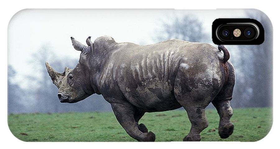 Adult IPhone X Case featuring the photograph Rhinoceros Blanc Ceratotherium Simum by Gerard Lacz