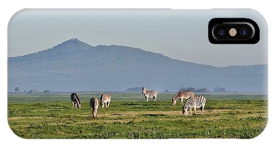 Close Up; Zebras; Rain; Morning; Sunshine; Animal; Black; White; Stripes; Field; Meadow; Green; Grass; South Africa; Swartland; Background; IPhone X Case featuring the photograph Zebras by Werner Lehmann